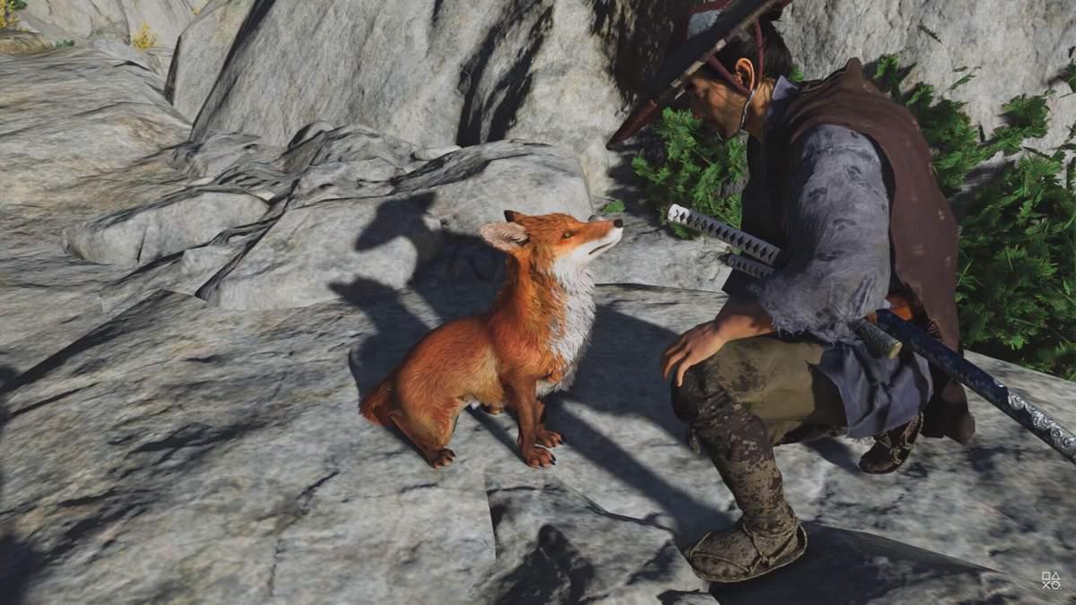Новые анимации лисы из Ghost of Tsushima Director's Cut покорили геймеров: милое видео - Игры - Games